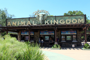 1_AnimalKingdom